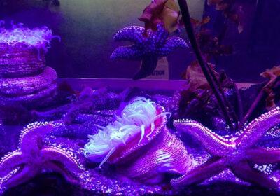 洛杉矶加州科学中心水族馆 海底世界免费体验-美国精品资讯