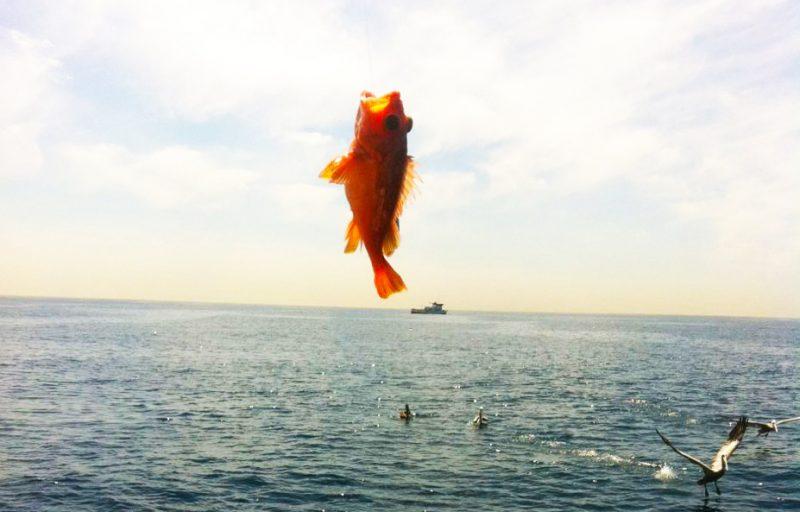 洛杉矶出海钓鱼实战攻略-美国精品资讯